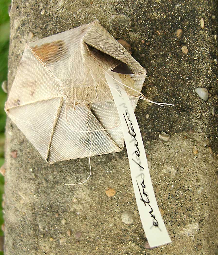 STICKER PROJECT - ENTER THE WOODS | Natural dye, stitch, paper, wax; 6cm-6cm. Photo: Hannah LambSticker Project - Enter the Woods Natural dye, stitch, paper, wax; 6cm-6cm. Photo: Hannah Lamb
